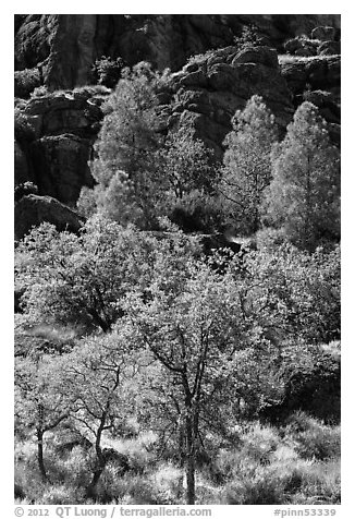 Trees and cliffs in late summer, Bear Gulch. Pinnacles National Park (black and white)