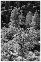 Trees and cliffs in late summer, Bear Gulch. Pinnacles National Park ( black and white)