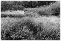 Winter frost on grasslands. Pinnacles National Park, California, USA. (black and white)