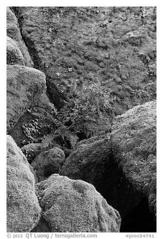 Mossy boulders, Bear Gulch. Pinnacles National Park (black and white)