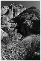 Shurbs and trees in winter below Machete Ridge. Pinnacles National Park ( black and white)