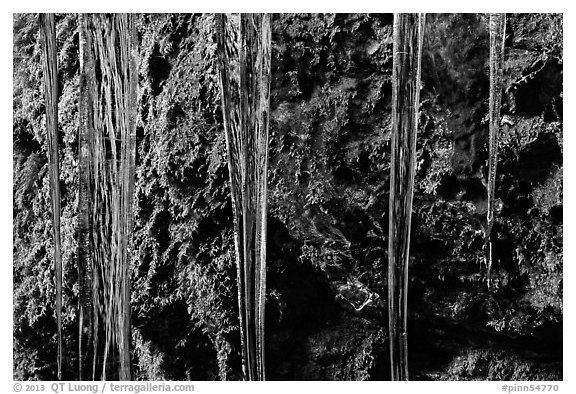 Icicles and moss, Balconies Cave. Pinnacles National Park (black and white)