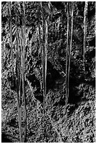 Icicles and mossy rocks, Balconies Caves. Pinnacles National Park, California, USA. (black and white)