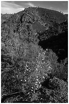 Bush in bloom and hill with rocks. Pinnacles National Park, California, USA. (black and white)