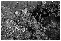 Blooms and pinnacles in spring. Pinnacles National Park, California, USA. (black and white)