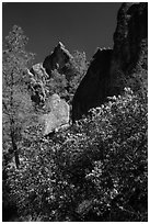 Blooming manzanita and high peaks. Pinnacles National Park, California, USA. (black and white)