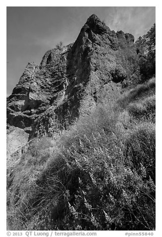 Lupine and rock towers. Pinnacles National Park (black and white)