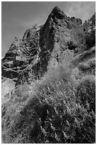 Lupine and rock towers. Pinnacles National Park, California, USA. (black and white)