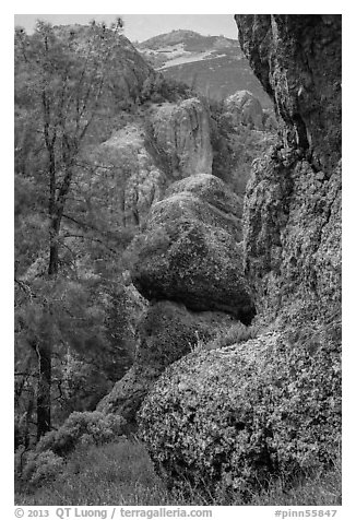 Andesite outcrops. Pinnacles National Park (black and white)