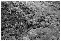 Hillside and rocks in spring. Pinnacles National Park ( black and white)