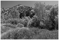Wildflowers and riparian habitat in the spring. Pinnacles National Park, California, USA. (black and white)