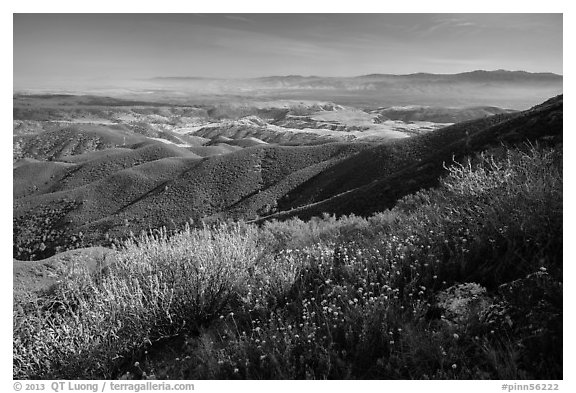 Wildflowers and Salinas Valley. Pinnacles National Park (black and white)