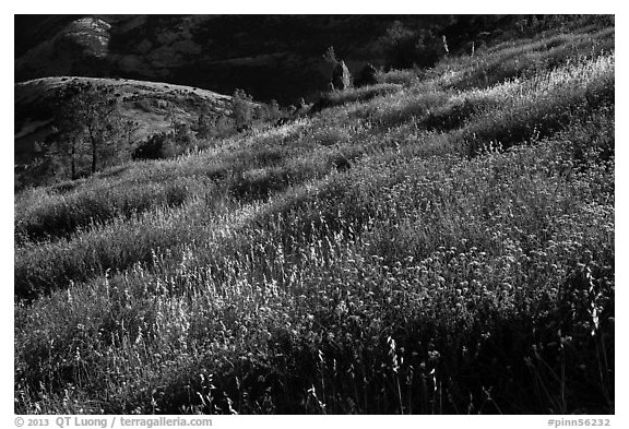 Grasses on hillside, late afternoon. Pinnacles National Park (black and white)