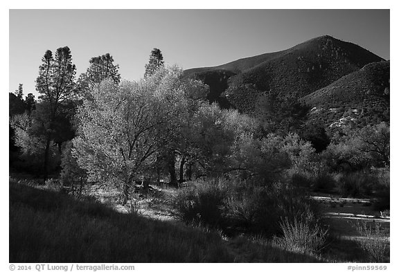Trees and hill, early autumn morning. Pinnacles National Park (black and white)