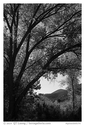 Hills framed by trees in autumn foliage. Pinnacles National Park (black and white)