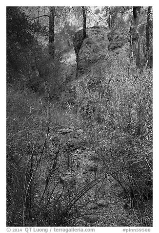 Shrubs and rocks along Dry Chalone Creek bed in autumn. Pinnacles National Park (black and white)