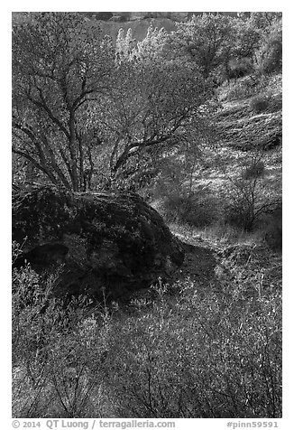 Rock and autumn foliage color along Chalone Creek. Pinnacles National Park (black and white)