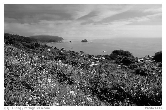 Wildflowers and Ocean, Del Norte Coast Redwoods State Park. Redwood National Park (black and white)