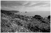 Wildflowers and Ocean near Klamath overlook. Redwood National Park ( black and white)