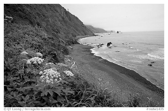 Coastline with black sand beach and wildflowers, Del Norte Coast Redwoods State Park. Redwood National Park (black and white)