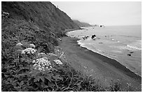 Coastline with black sand beach and wildflowers. Redwood National Park, California, USA. (black and white)