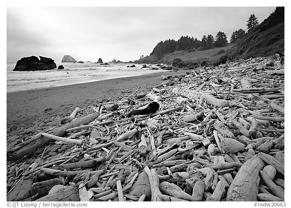 Driftwood, Hidden Beach. Redwood National Park (black and white)