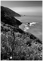 Wildflowers and Enderts Beach. Redwood National Park, California, USA. (black and white)
