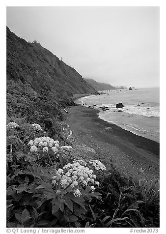 Wildflowers and beach with black sand in foggy weather, Del Norte Coast Redwoods State Park. Redwood National Park (black and white)