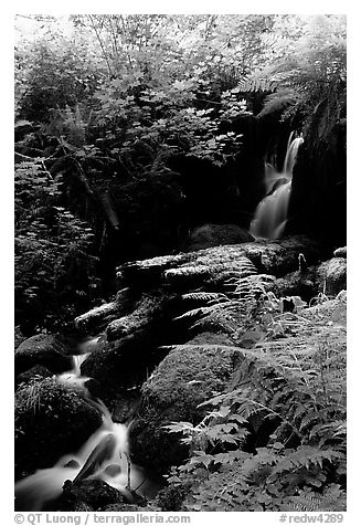 Waterfall, Prairie Creek Redwoods State Park. Redwood National Park (black and white)
