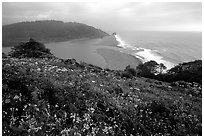 Coastline from Klamath overlook. Redwood National Park ( black and white)
