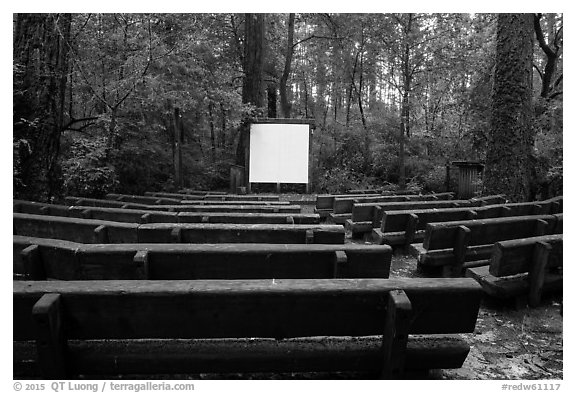 Amphitheater, Jedediah Smith Redwoods State Park. Redwood National Park (black and white)