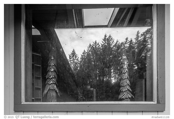 Redwood forest, Hiouchi Information center window reflexion. Redwood National Park (black and white)