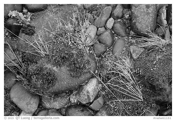Ground close-up of pebbles and moss on shore of Smith River, Jedediah Smith Redwoods State Park. Redwood National Park (black and white)