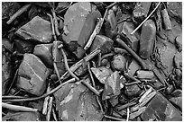 Close-up of driftwood, kelp, and rocks, Enderts Beach. Redwood National Park ( black and white)