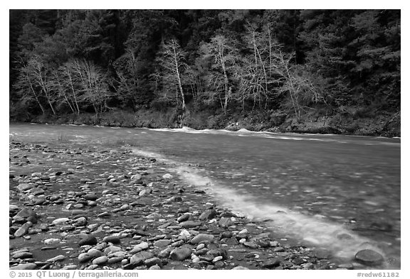 Smith River in winter, Jedediah Smith Redwoods State Park. Redwood National Park (black and white)
