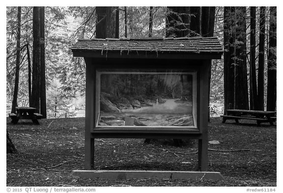 Interpretive picture and redoods on the banks of Smith River, Jedediah Smith Redwoods State Park. Redwood National Park (black and white)