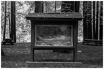 Interpretive picture and redoods on the banks of Smith River, Jedediah Smith Redwoods State Park. Redwood National Park ( black and white)