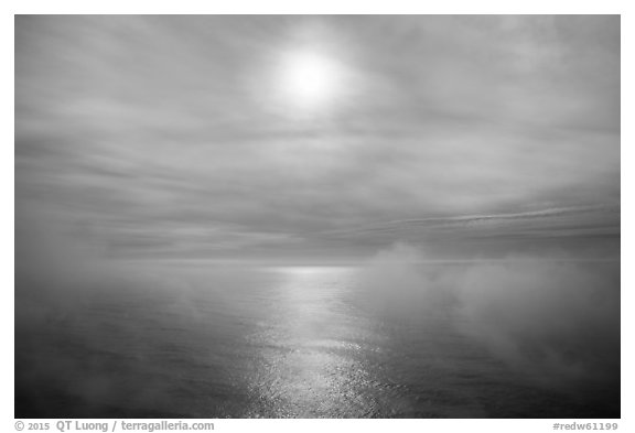Veilled sun and fog floating above Ocean. Redwood National Park (black and white)