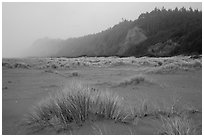 Dune grass, bluff in fog, Gold Bluffs Beach, Prairie Creek Redwoods State Park. Redwood National Park ( black and white)