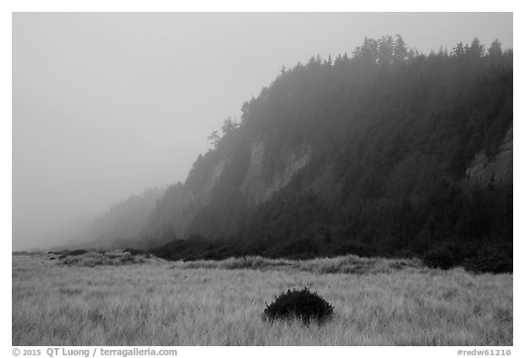 Gold Bluffs in the fog, Prairie Creek Redwoods State Park. Redwood National Park (black and white)