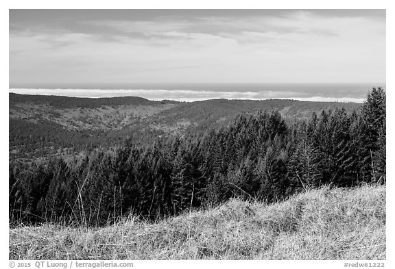 Grasses, trees, and distant Ocean from Dolason Prairie. Redwood National Park (black and white)