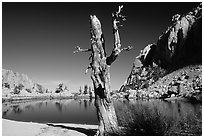 Tree skeleton, Mirror Lake, and Thor Peak, Inyo National Forest. California, USA ( black and white)