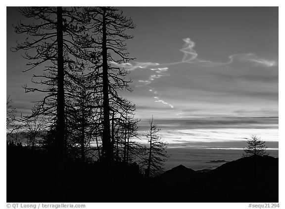 Sky trails at sunset. Sequoia National Park (black and white)