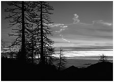 Sky trails at sunset. Sequoia National Park, California, USA. (black and white)