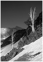Bare trees above Mineral King, early summer. Sequoia National Park, California, USA. (black and white)