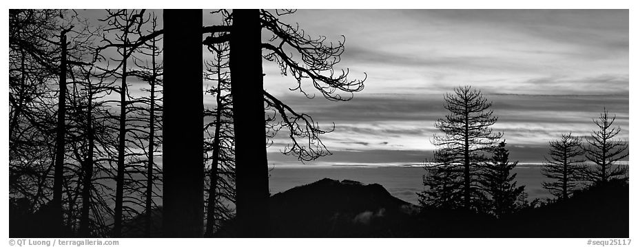Sea of clouds and trees at sunset. Sequoia National Park (black and white)