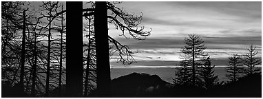 Sea of clouds and trees at sunset. Sequoia National Park (Panoramic black and white)