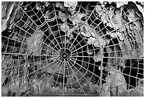 Spiderweb-like gate closing  Crystal Cave. Sequoia National Park, California, USA. (black and white)