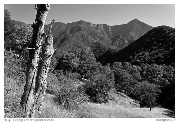 Sierra Nevada hills with bird-pegged tree. Sequoia National Park (black and white)