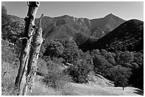 Sierra Nevada hills with bird-pegged tree. Sequoia National Park, California, USA. (black and white)